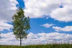 Abedul solo contra el cielo azul en el paisaje de la primavera Imagen de archivo