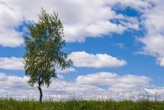 Abedul solo contra el cielo azul en el paisaje de la primavera Fotografía de archivo libre de regalías