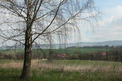 Abedul solo en Bohemia del norte, República Checa Fotos de archivo