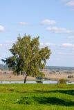 Abedul solo en el campo. Fotos de archivo libres de regalías