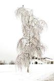Abedul solo en invierno Imagen de archivo libre de regalías