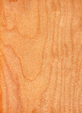Abedul (textura de madera) Imagenes de archivo