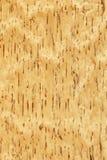 Abedul (textura de madera) Foto de archivo libre de regalías