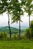 Abedul tres Primavera en montañas Fotografía de archivo libre de regalías