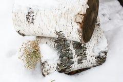Abedul una nieve de la conexión Foto de archivo