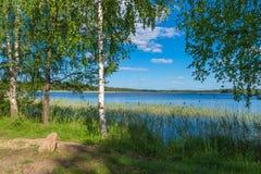 Abedul verde en el lago en comienzo del verano Imagen de archivo libre de regalías