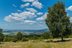 Abedul verde orgulloso grande en un campo contra un contexto de un canto de la montaña y de un cielo azul Foto de archivo libre de regalías