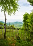 Abedul verde Primavera en montañas Imagenes de archivo