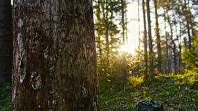 Abedul viejo en el bosque siberiano del verano, Ural, granangular Fotos de archivo libres de regalías