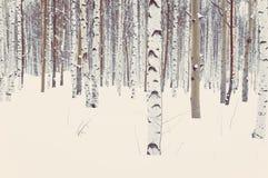 Abedul y álamo temblón en nieve del invierno Foto de archivo libre de regalías