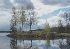 Abedul y agua Fotos de archivo libres de regalías