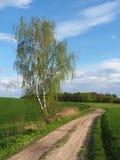 Abedul y camino en primavera Foto de archivo libre de regalías