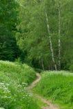 Abedul y camino en un parque Fotografía de archivo libre de regalías