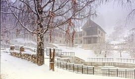Abedul y nieve Foto de archivo libre de regalías