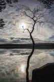 Abedul y nubes en el lago Garten en Escocia Foto de archivo libre de regalías