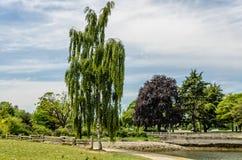 Abedul y otros árboles en un parque con una cerca de madera con una piedra Imagen de archivo