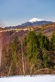Abedul y picea en las colinas nevosas en Cárpatos Fotografía de archivo libre de regalías