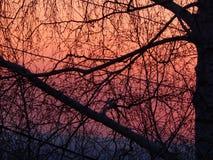 Abedul y puesta del sol Fotografía de archivo