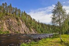 Abedul y río Imagen de archivo