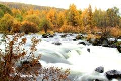 Abedul y río Foto de archivo