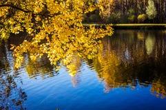 Abedul y reflexión del otoño en el agua de la charca Imagen de archivo libre de regalías