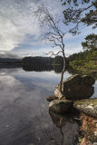Abedul y roca en el lago Garten en Escocia Imágenes de archivo libres de regalías