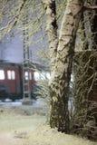Abedul y tren nevados Foto de archivo libre de regalías