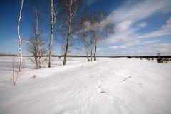 Abedules al borde de un campo nevado Fotografía de archivo