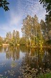 Abedules al lado del agua Foto de archivo