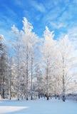 abedules Blanco-blancos Fotos de archivo libres de regalías