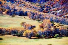 Abedules blancos del otoño en el prado Fotos de archivo