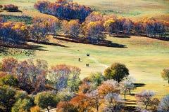 Abedules blancos del otoño en el prado Imágenes de archivo libres de regalías