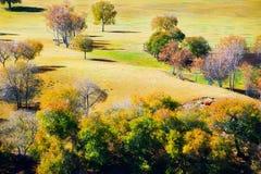 Abedules blancos del otoño en la estepa Fotografía de archivo