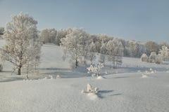 Abedules canosos en la cuesta en nieve profunda en el invierno Fotos de archivo