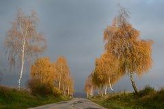 Abedules de oro en la caída por el camino con el cielo cubierto Fotografía de archivo