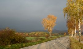 Abedules de oro en la caída por el camino con el cielo cubierto Imagenes de archivo