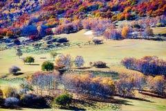 Abedules del otoño en el prado Imagenes de archivo