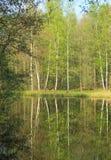 Abedules en el lago Imagenes de archivo