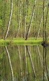 Abedules en el lago Fotografía de archivo libre de regalías