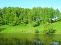 Abedules en el río Foto de archivo libre de regalías