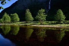 Abedules en el río Fotografía de archivo