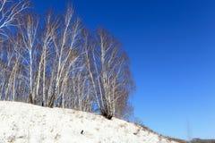 Abedules en invierno Imagen de archivo