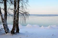 Abedules en la costa del invierno Fotografía de archivo