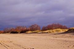Abedules en la duna Foto de archivo