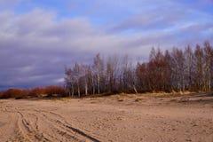 Abedules en la duna Imagen de archivo