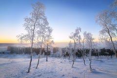 Abedules en la escarcha, mañana, amanecer escarchado en la tundra ártica Fotografía de archivo libre de regalías
