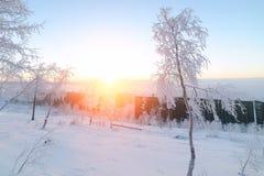 Abedules en la escarcha, mañana, amanecer escarchado en la tundra ártica Imagen de archivo libre de regalías