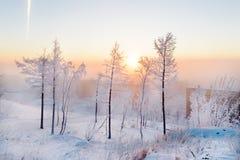 Abedules en la escarcha, mañana, amanecer escarchado en la tundra ártica Fotografía de archivo