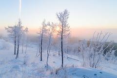 Abedules en la escarcha, mañana, amanecer escarchado en la tundra ártica Foto de archivo