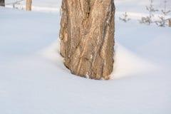 Abedules en la nieve en invierno Árboles bajo capa grande de nieve en invierno Imágenes de archivo libres de regalías